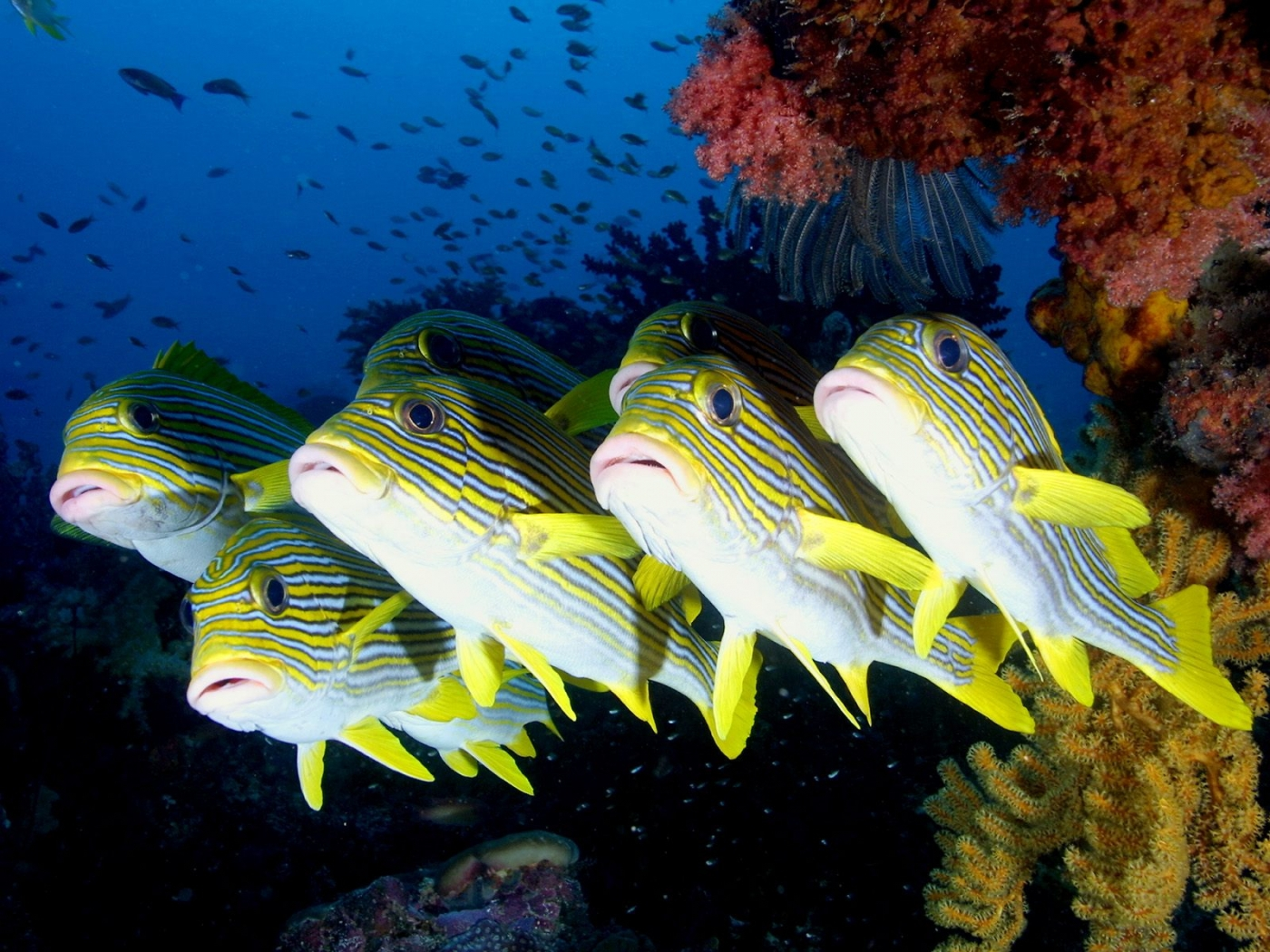 33846 download wallpaper Animals, Fishes screensavers and pictures for free