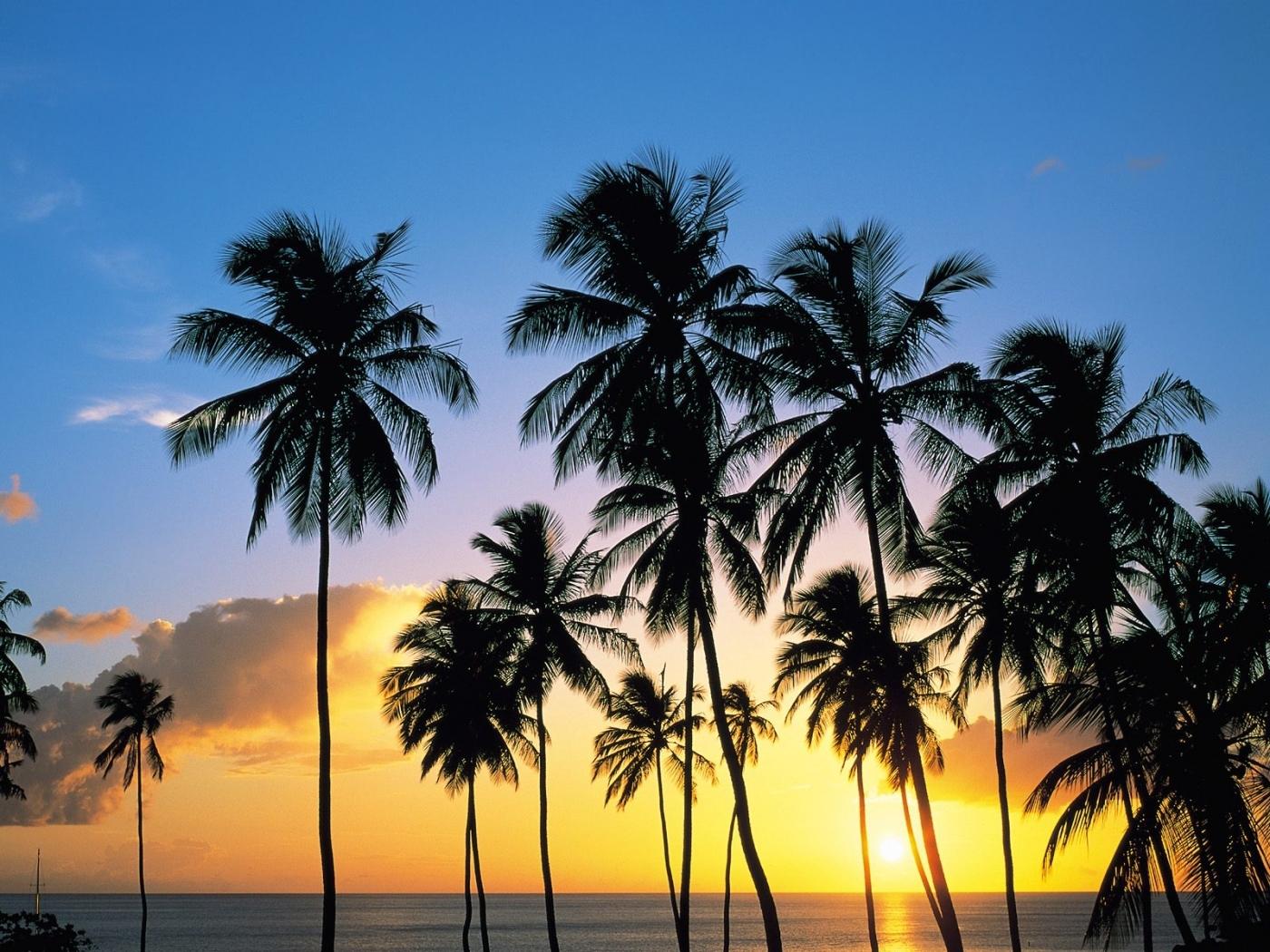 26997 免費下載壁紙 景观, 树, 日落, 海, 棕榈 屏保和圖片