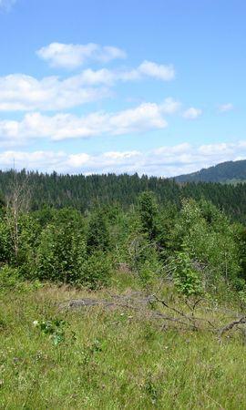 25586 скачать обои Пейзаж, Деревья, Трава, Облака - заставки и картинки бесплатно