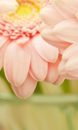 20140 baixar papel de parede Plantas, Flores, Fundo, Rosas - protetores de tela e imagens gratuitamente