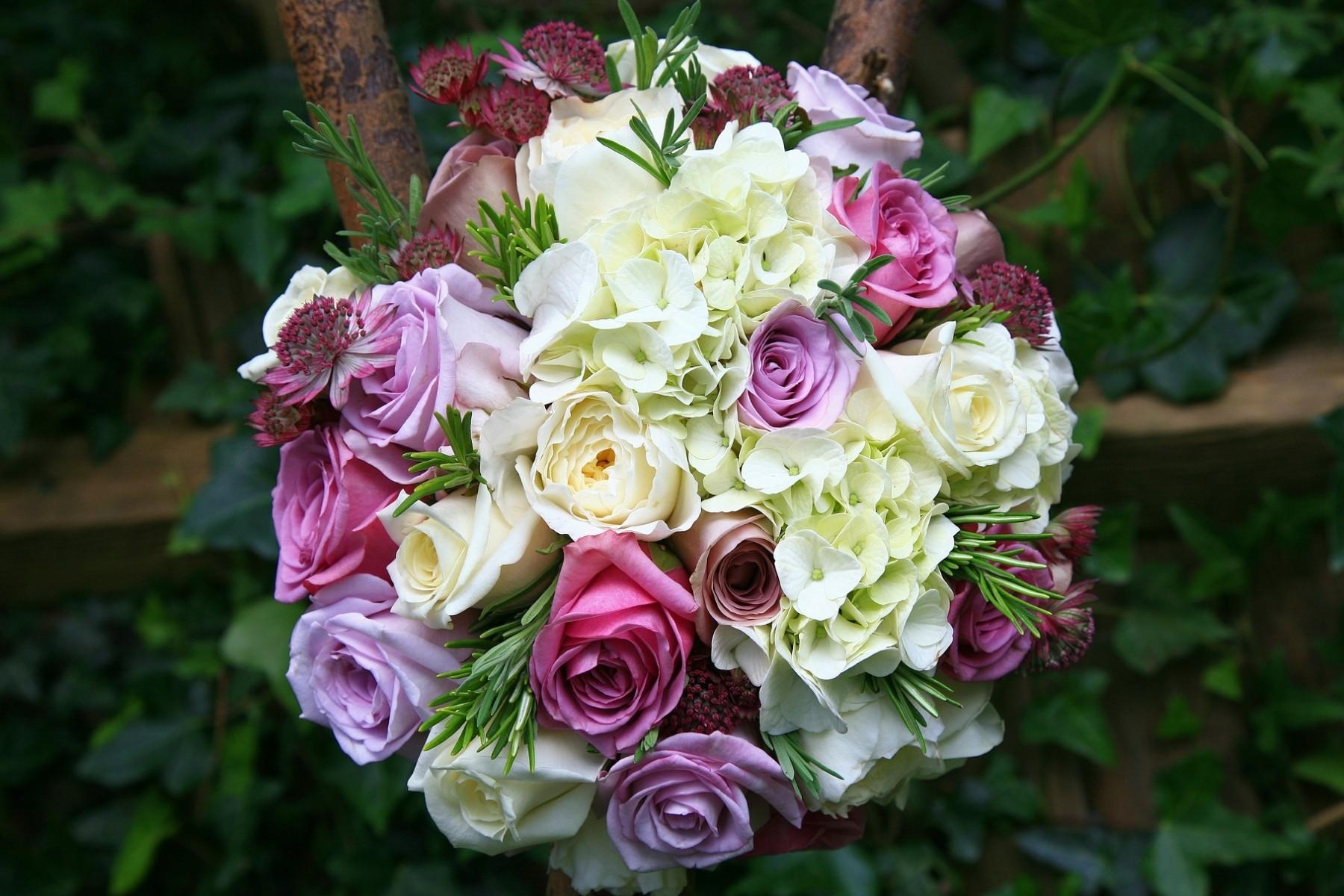 102079 descargar fondo de pantalla Roses, Flores, Ramo, Nitidez, Agudeza, Hortensias, Astrantia, Astration: protectores de pantalla e imágenes gratis
