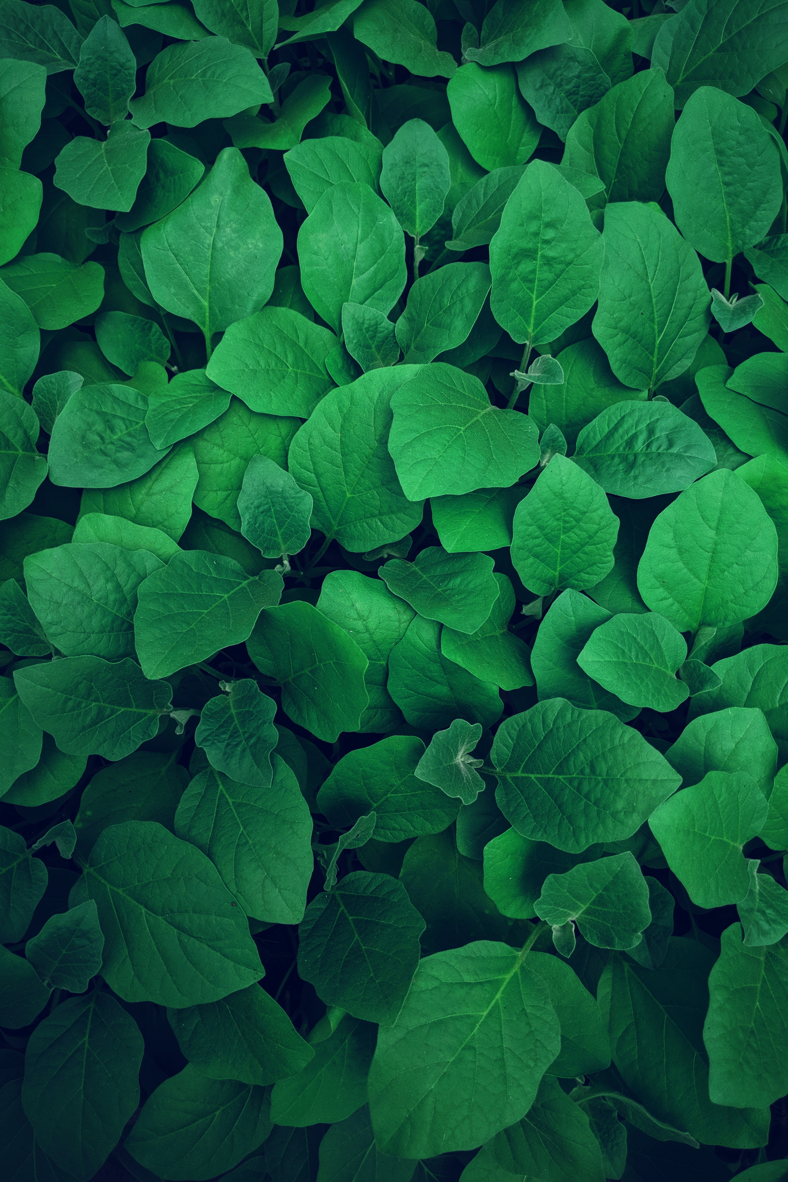 Download free Vegetation HD pictures
