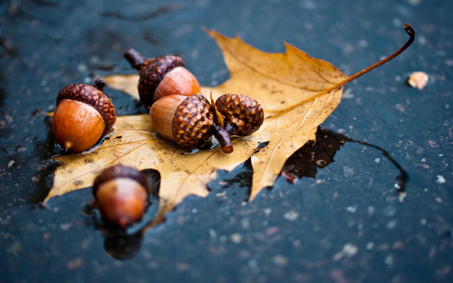 23894 скачать обои Растения, Осень, Листья, Желуди - заставки и картинки бесплатно