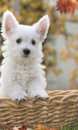 40878 baixar papel de parede Animais, Cães - protetores de tela e imagens gratuitamente