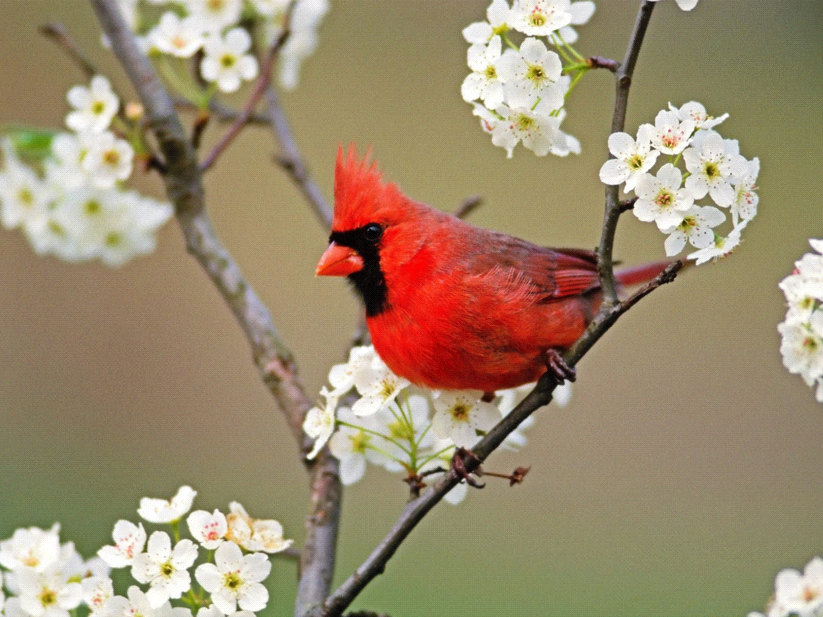 6840 download wallpaper Animals, Birds screensavers and pictures for free
