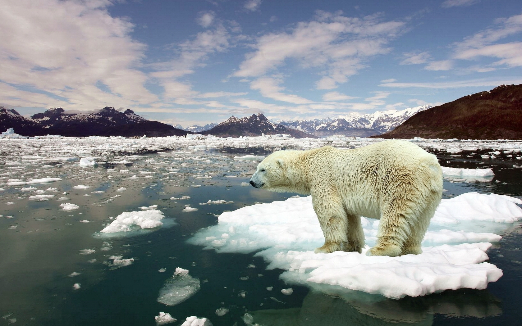 45941 download wallpaper Animals, Landscape, Sea, Bears screensavers and pictures for free