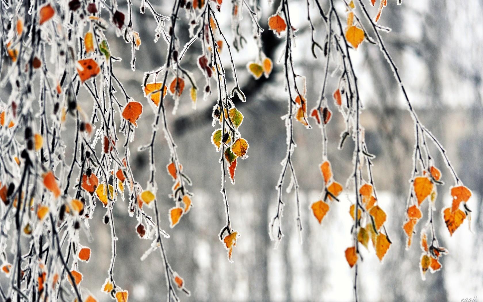 23224 скачать обои Пейзаж, Деревья, Листья, Лед - заставки и картинки бесплатно