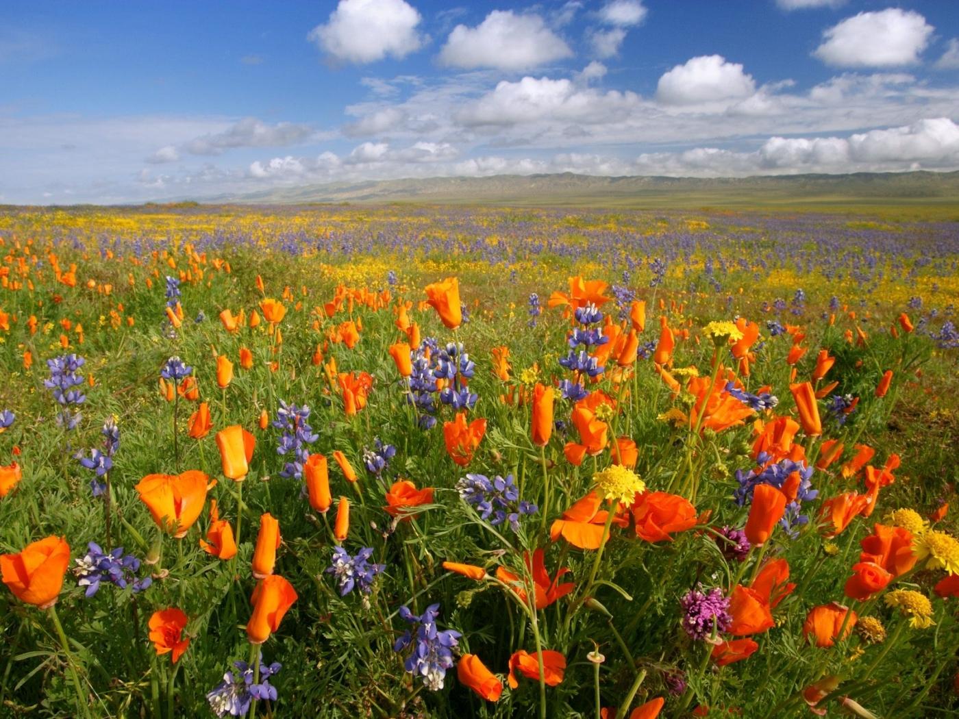 Скачать картинку Растения, Природа, Цветы, Пейзаж в телефон бесплатно.