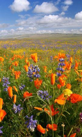 46201 скачать обои Растения, Пейзаж, Природа, Цветы - заставки и картинки бесплатно