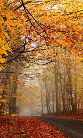 24489 скачать обои Пейзаж, Деревья, Дороги, Осень, Листья - заставки и картинки бесплатно