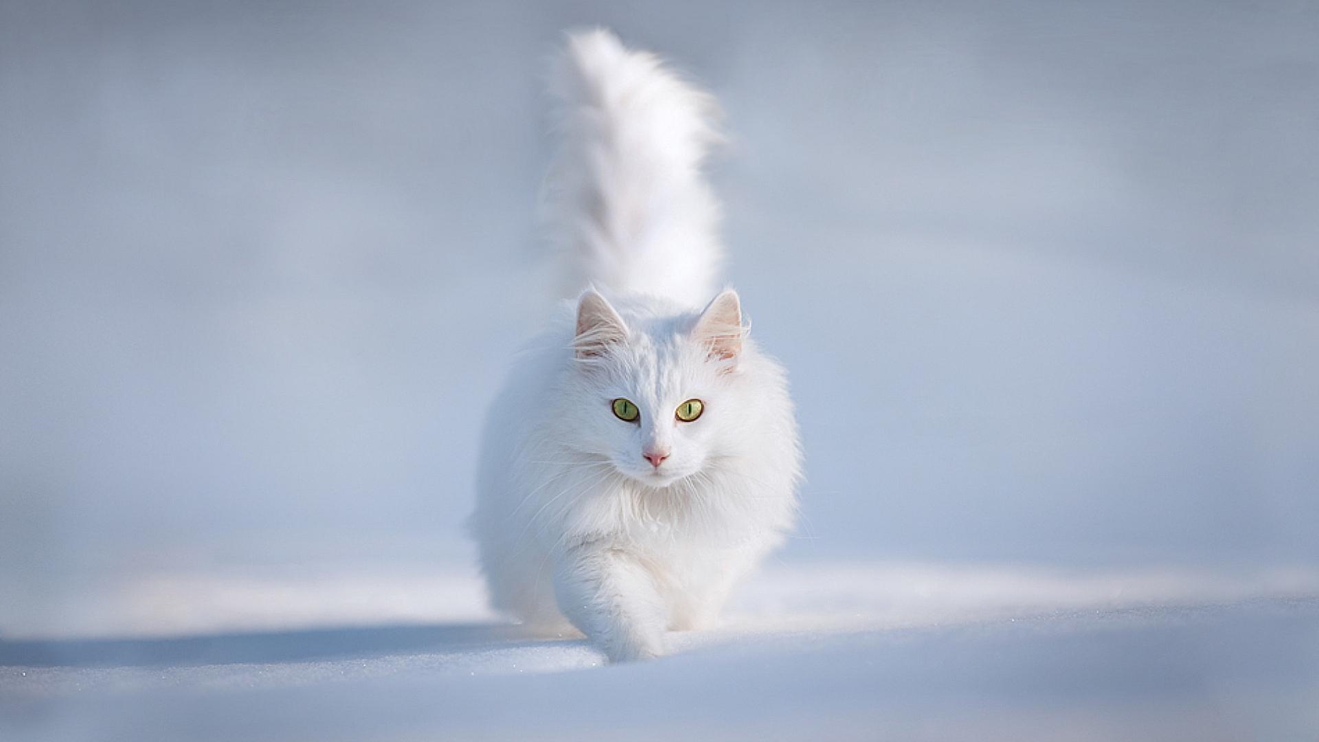 36119 descargar fondo de pantalla Animales, Gatos: protectores de pantalla e imágenes gratis