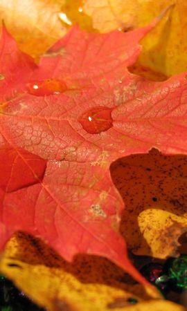 10038 скачать обои Растения, Фон, Осень, Листья, Капли - заставки и картинки бесплатно