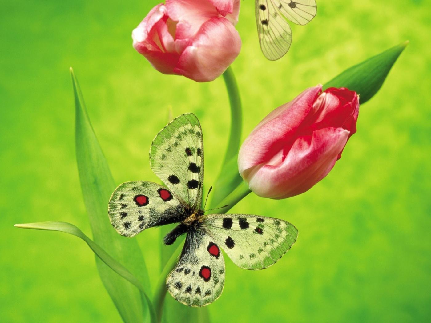 Скачать картинку Бабочки, Насекомые в телефон бесплатно.