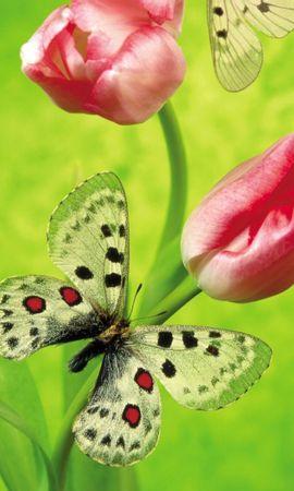 35660 Salvapantallas y fondos de pantalla Insectos en tu teléfono. Descarga imágenes de Mariposas, Insectos gratis