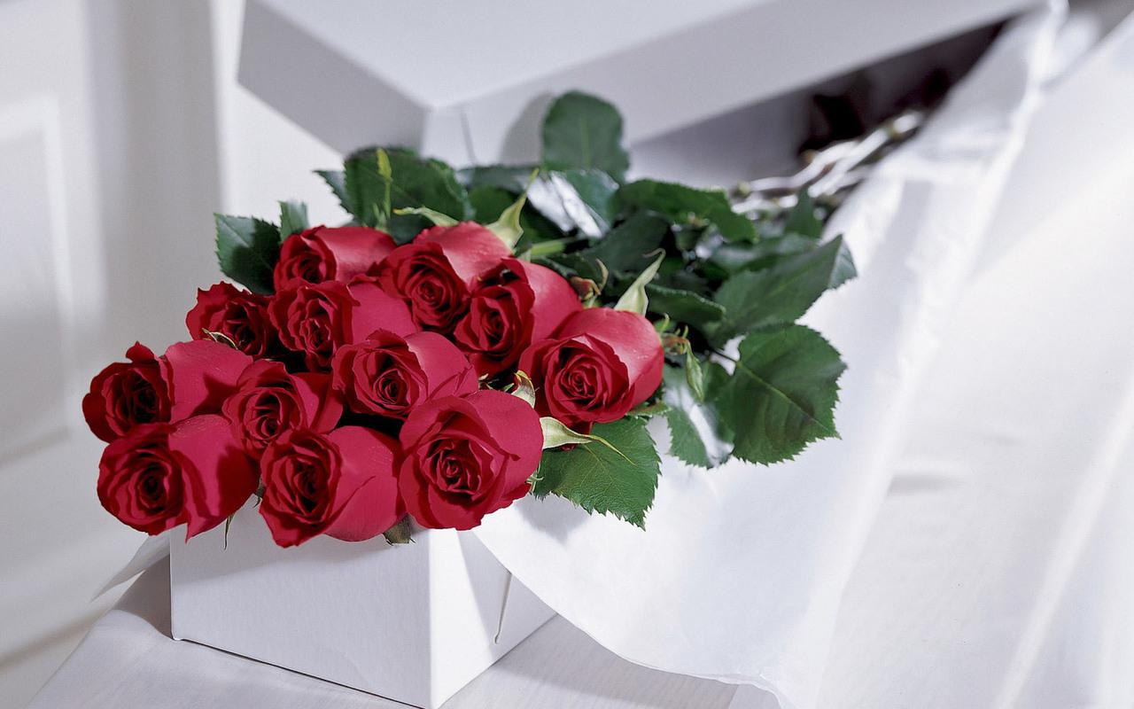 免費壁紙15581:植物, 花卉, 玫瑰 下載手機圖片
