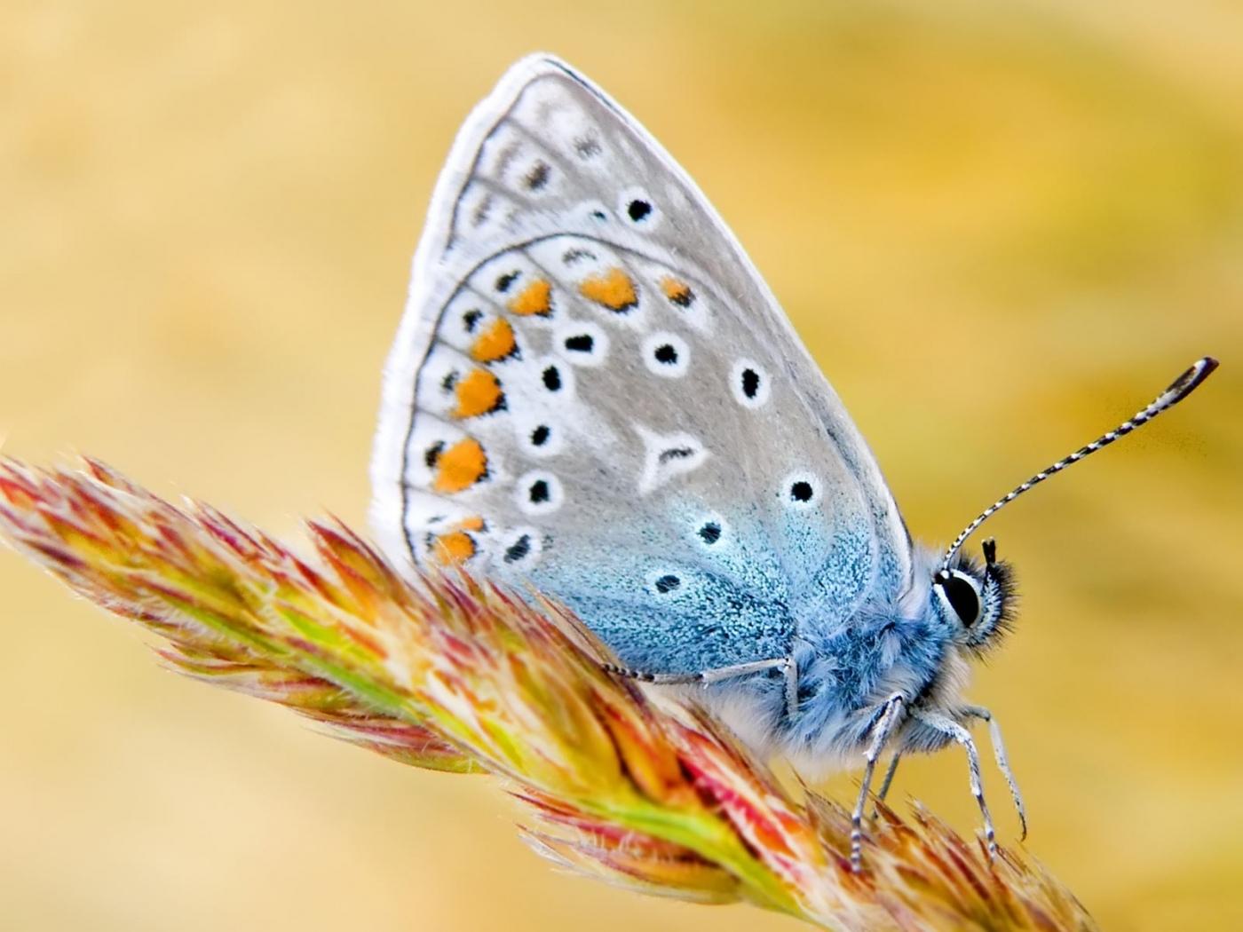 40591 скачать обои Бабочки, Насекомые - заставки и картинки бесплатно