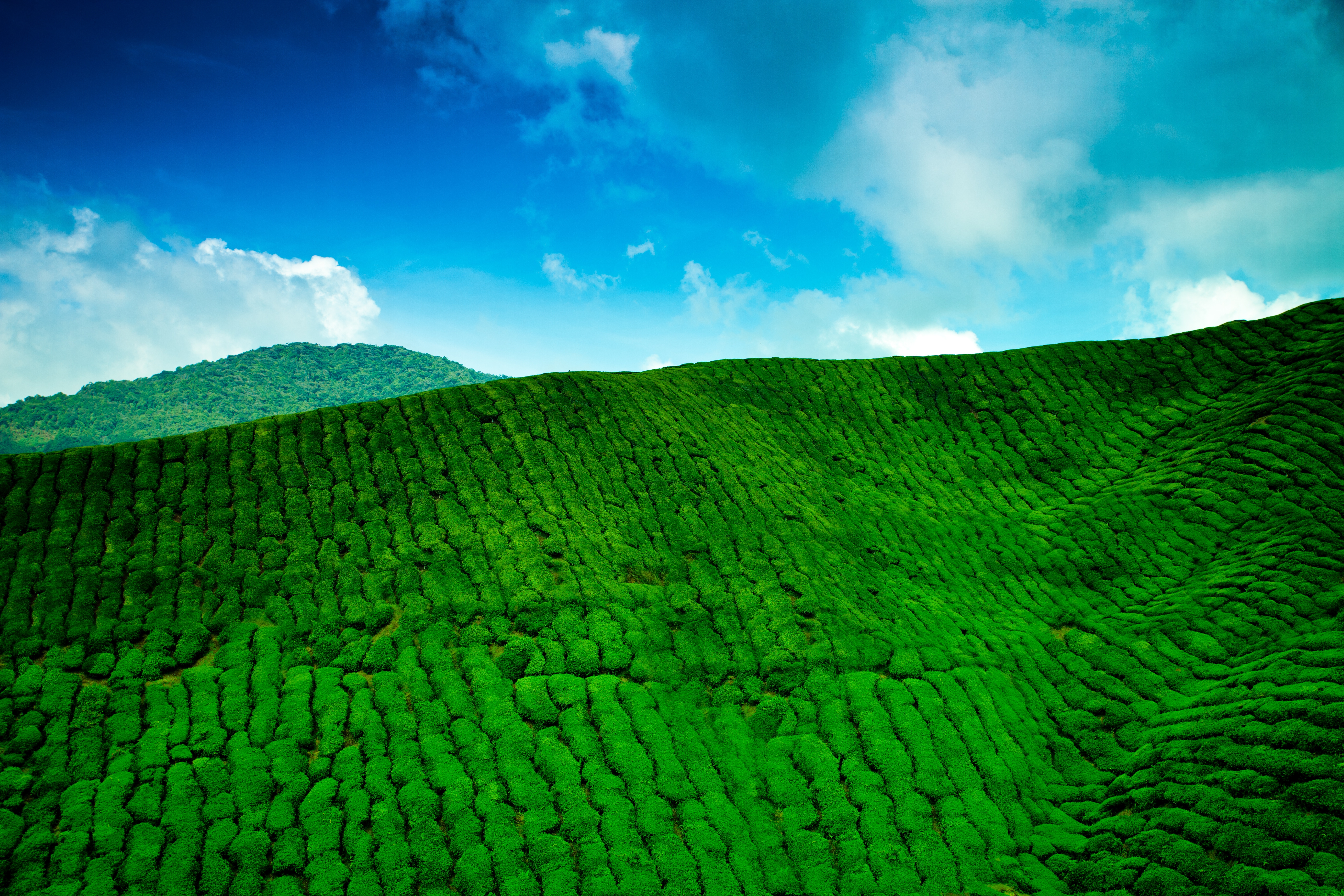 73814 download wallpaper Nature, Mountains, Greens, Height, Plantation, Tea screensavers and pictures for free