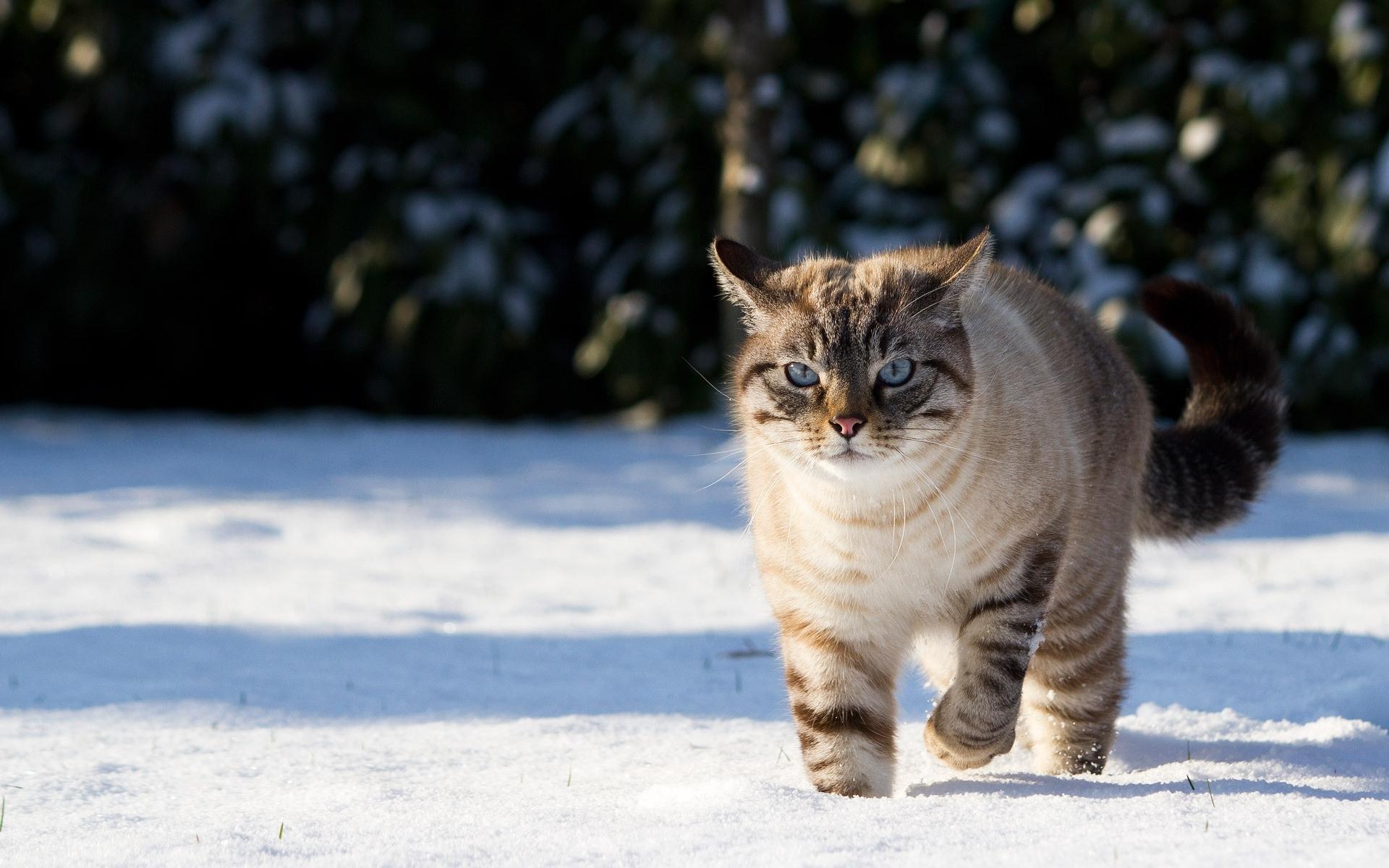 Скачать картинку Кошки (Коты, Котики), Животные в телефон бесплатно.