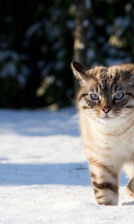 25420 скачать обои Животные, Кошки (Коты, Котики) - заставки и картинки бесплатно