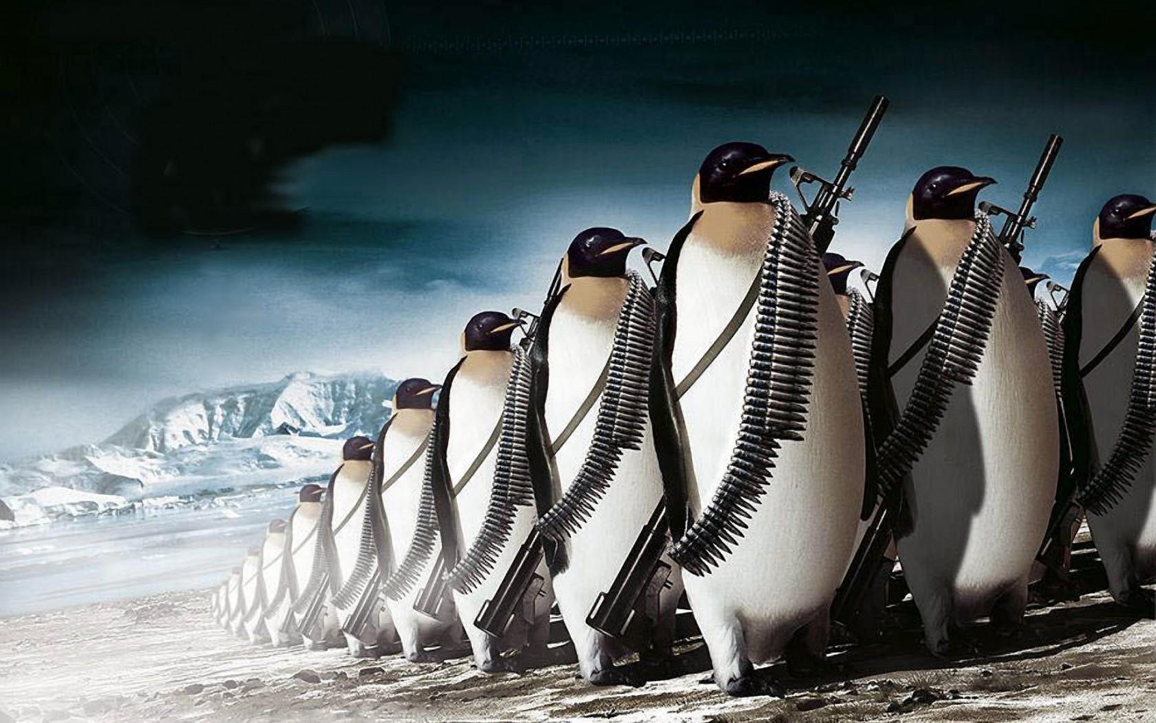 42005 économiseurs d'écran et fonds d'écran Dessins sur votre téléphone. Téléchargez Animaux, Pinguouins, Dessins images gratuitement