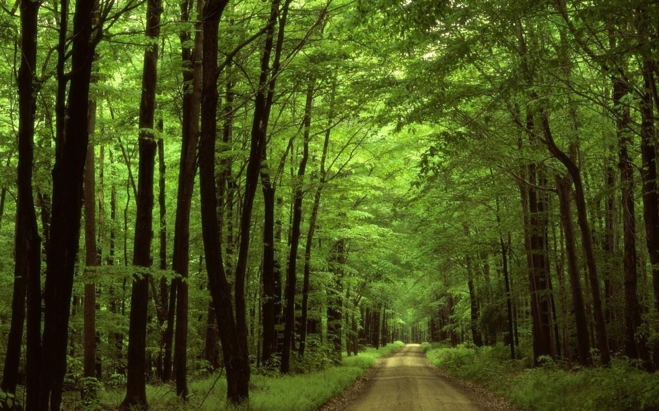 46230 скачать обои Пейзаж, Природа, Деревья - заставки и картинки бесплатно