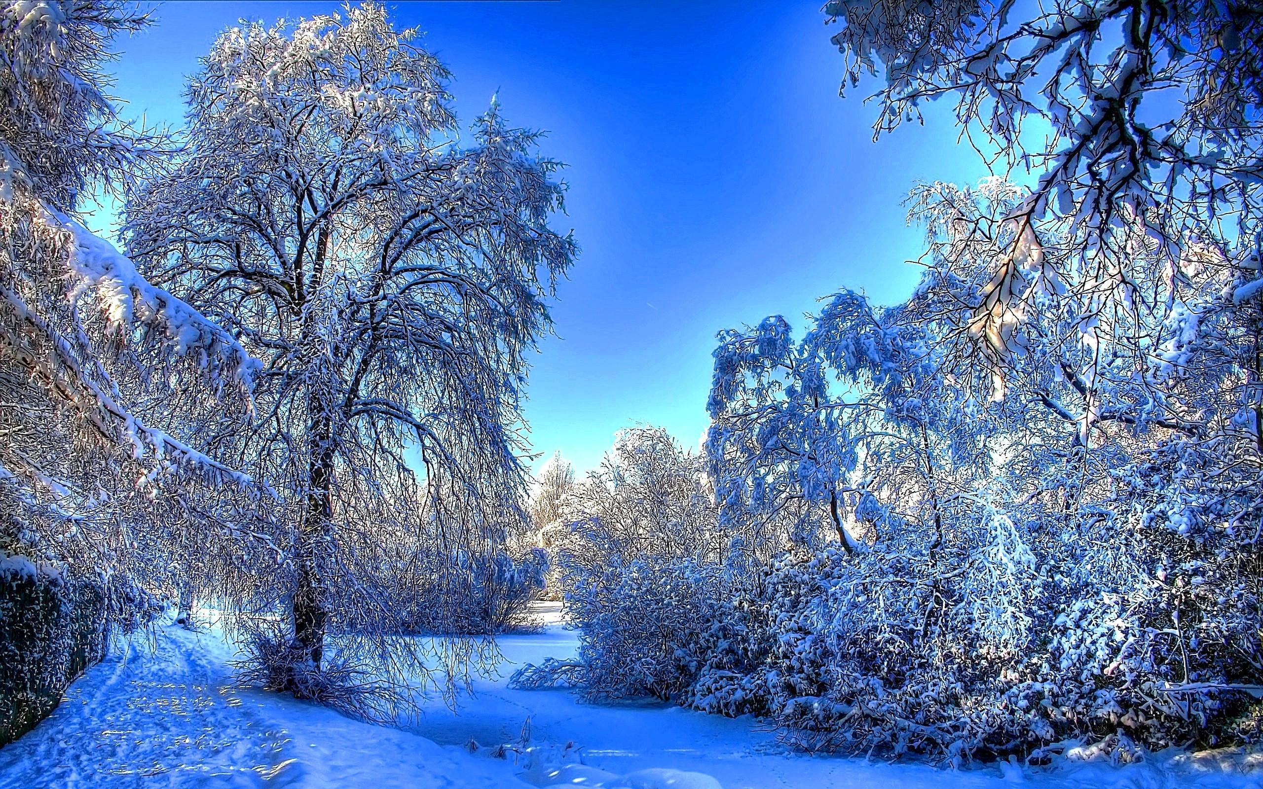 23005 descargar fondo de pantalla Paisaje, Invierno, Árboles, Nieve: protectores de pantalla e imágenes gratis