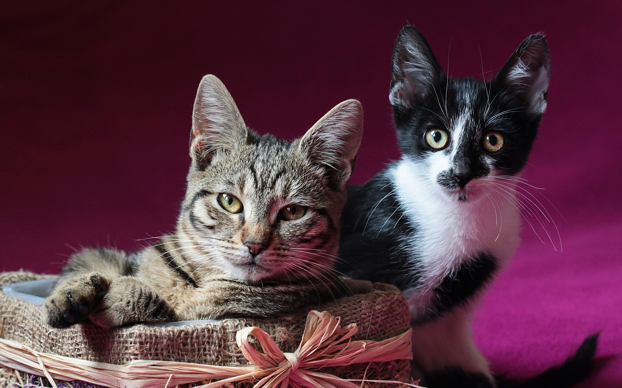 75429 download wallpaper Animals, Cats, Couple, Pair, To Lie Down, Lie, Kitty, Kitten screensavers and pictures for free