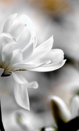 47066 baixar papel de parede Plantas, Flores - protetores de tela e imagens gratuitamente