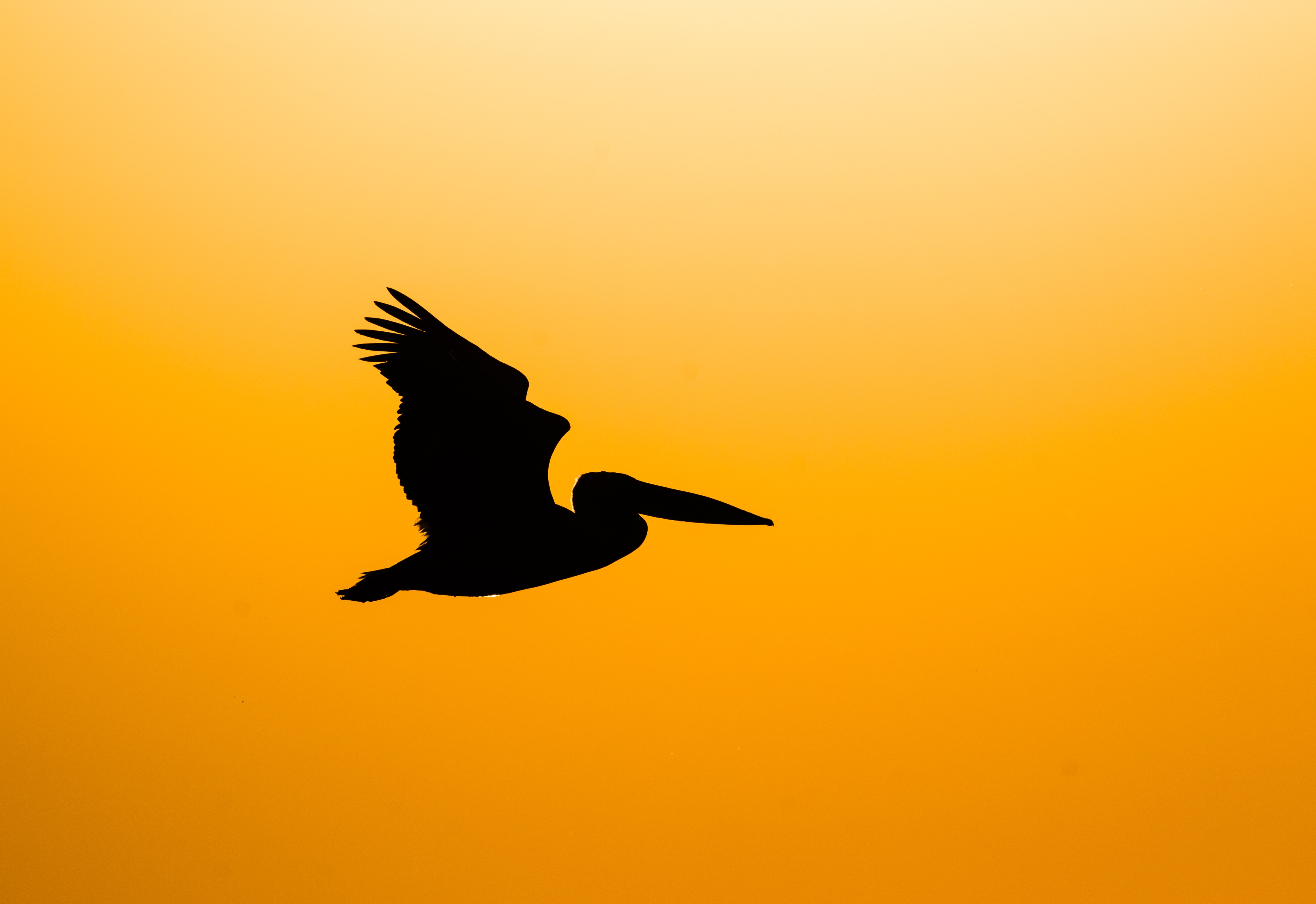 91194 download wallpaper Animals, Pelican, Bird, Silhouette, Dark, Fly screensavers and pictures for free