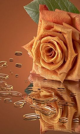 41943 Protetores de tela e papéis de parede Imagens em seu telefone. Baixe Plantas, Flores, Rosas, Imagens fotos gratuitamente