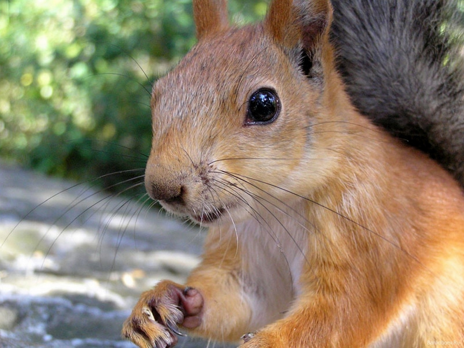556 download wallpaper Animals, Squirrel, Rodents screensavers and pictures for free