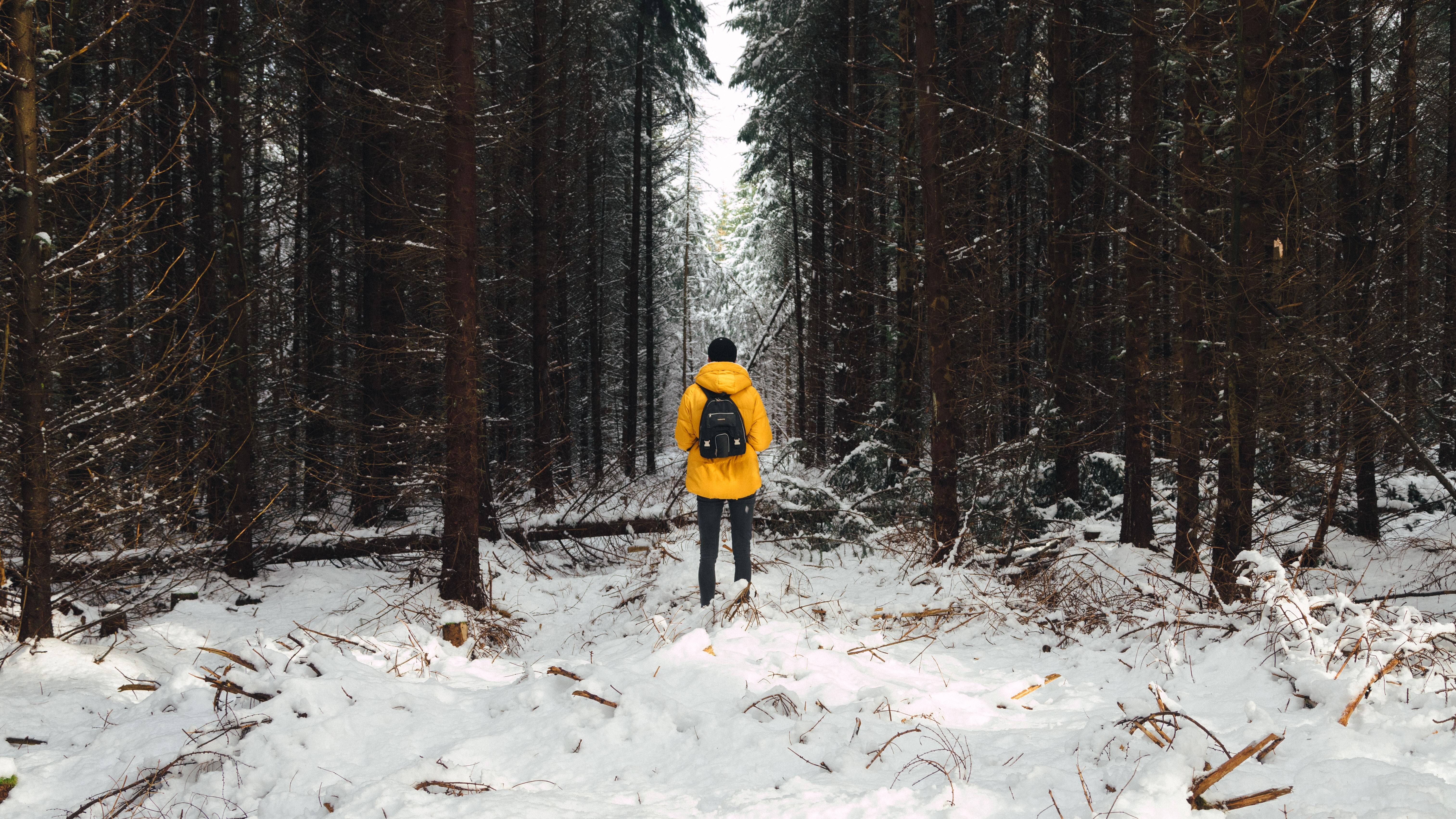 93555 Screensavers and Wallpapers Human for phone. Download Nature, Trees, Winter, Snow, Forest, Human, Person pictures for free