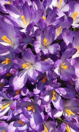 24551 скачать обои Растения, Цветы - заставки и картинки бесплатно