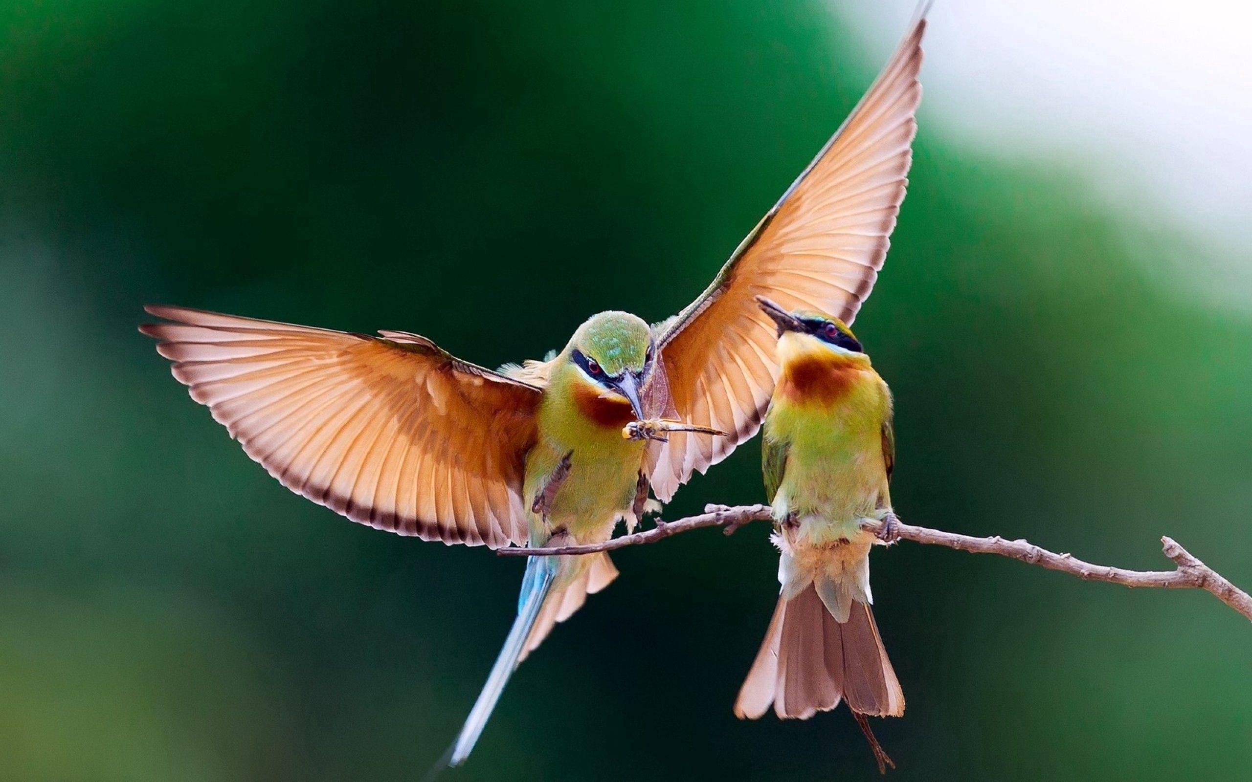 152886 Hintergrundbild herunterladen Tiere, Vögel, Paar, Ast, Zweig, Flügel, Welle, Fegen - Bildschirmschoner und Bilder kostenlos