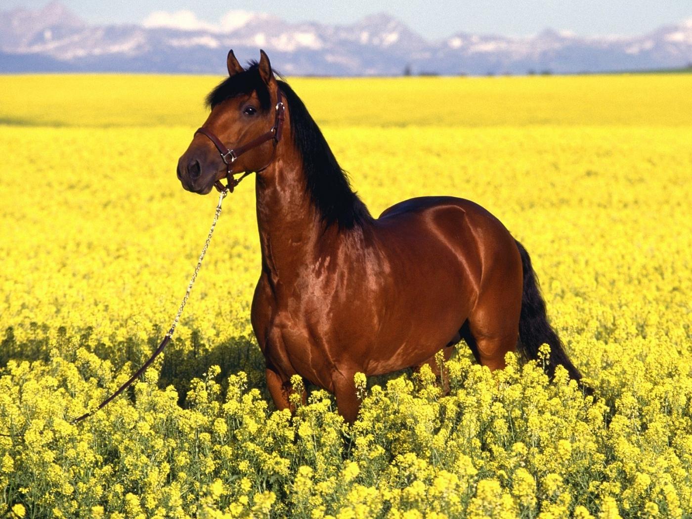 44187 скачать обои Лошади, Животные, Пейзаж, Поля - заставки и картинки бесплатно