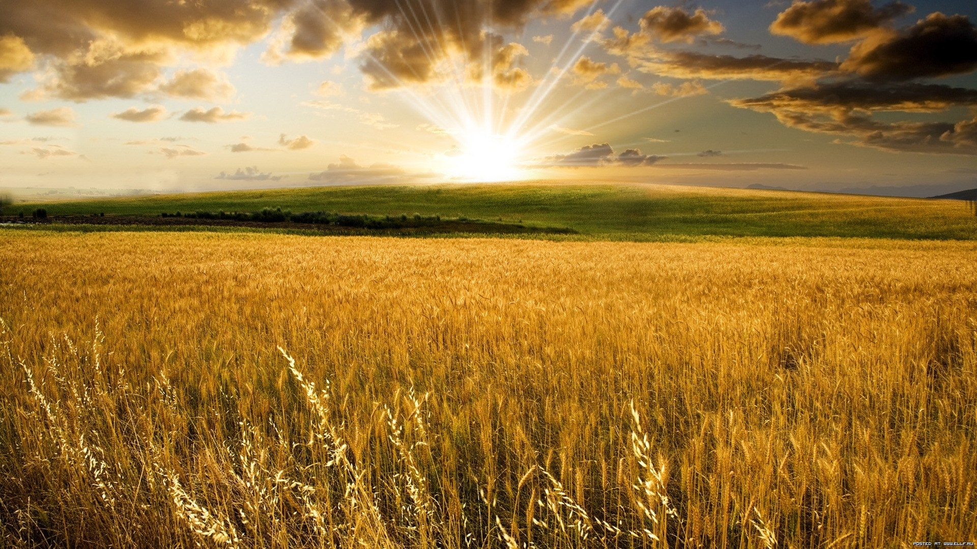 24822 скачать обои Пейзаж, Поля, Солнце, Облака - заставки и картинки бесплатно