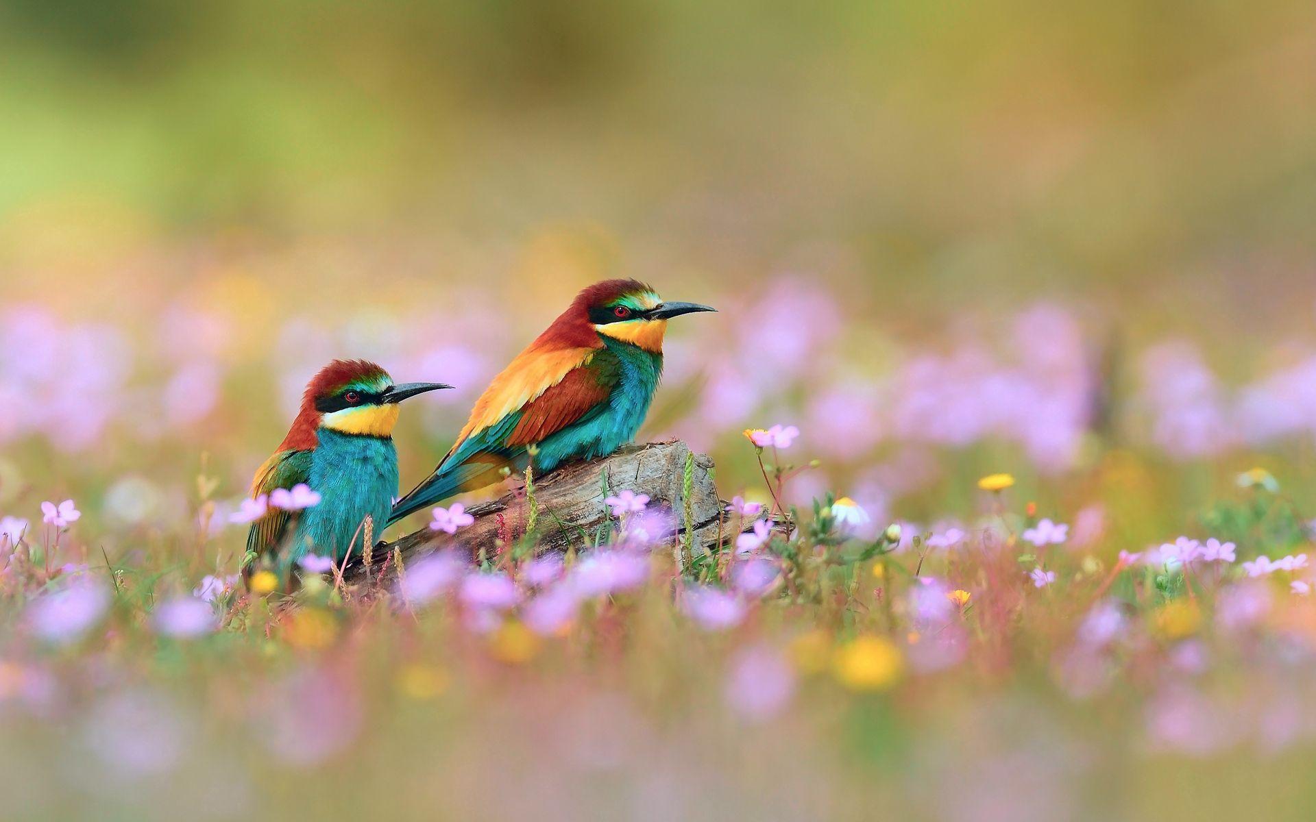 125544 Заставки и Обои Птицы на телефон. Скачать Птицы, Животные, Цветы, Трава, Размытость, Поле картинки бесплатно