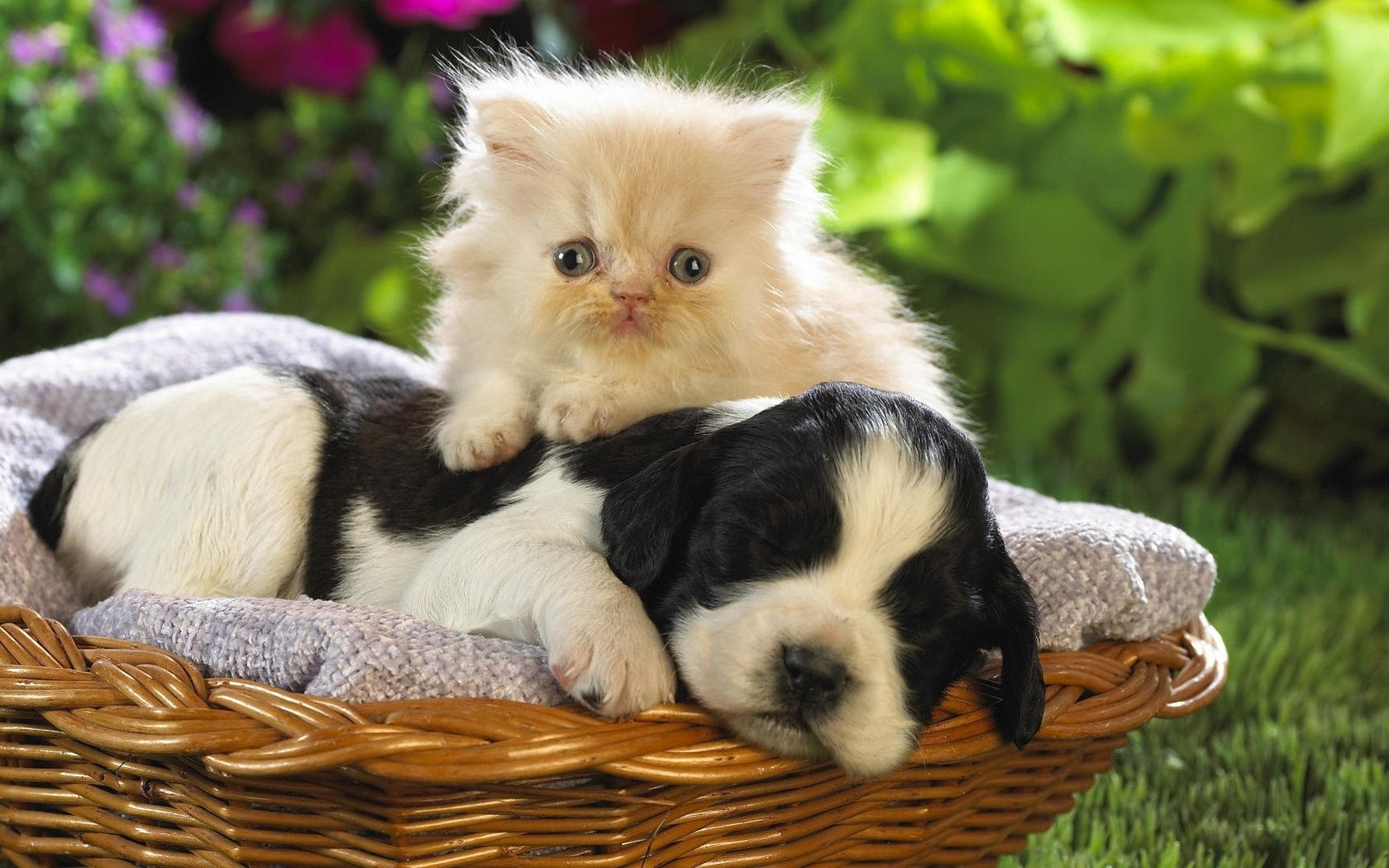 119431 download wallpaper Animals, Puppy, Kitty, Kitten, Basket, Grass, Friendship, To Lie Down, Lie, Flowers screensavers and pictures for free
