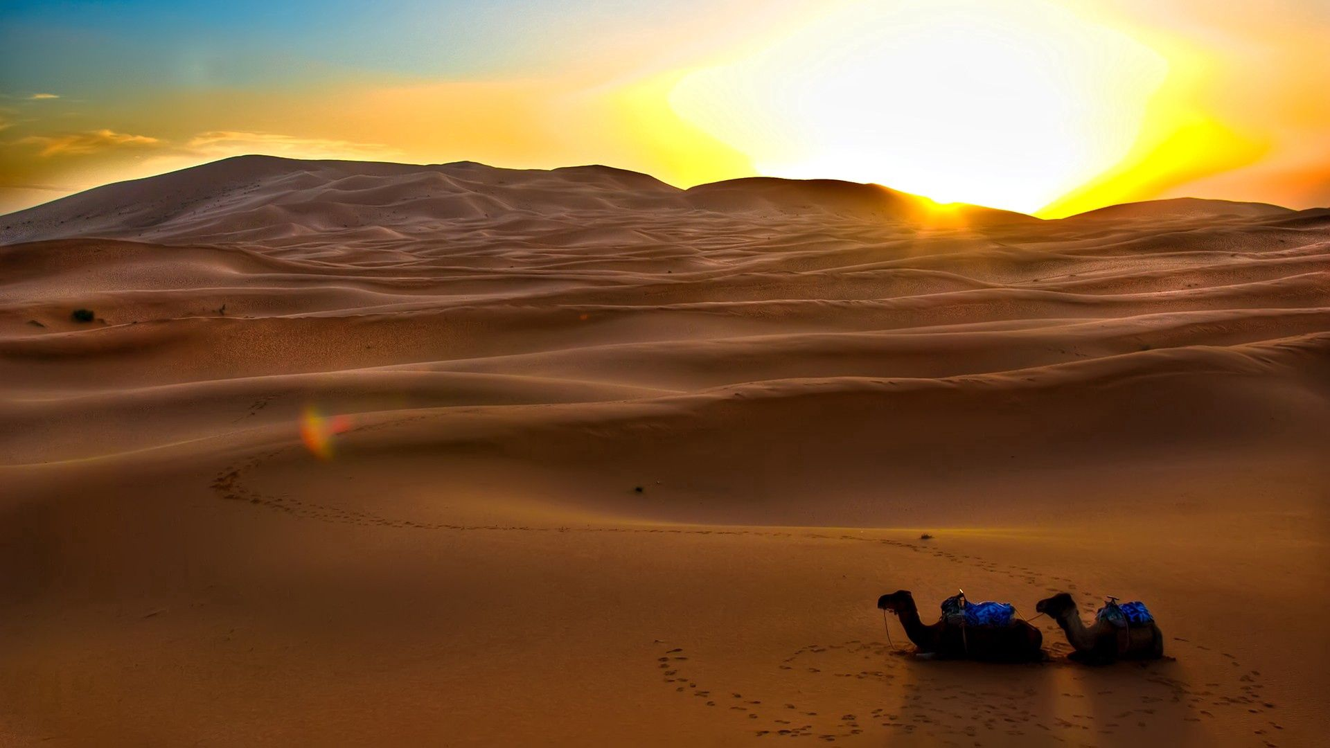 145014 download wallpaper Nature, Sand, Sunset, Evening, Traces, Desert, Sun, Camels screensavers and pictures for free