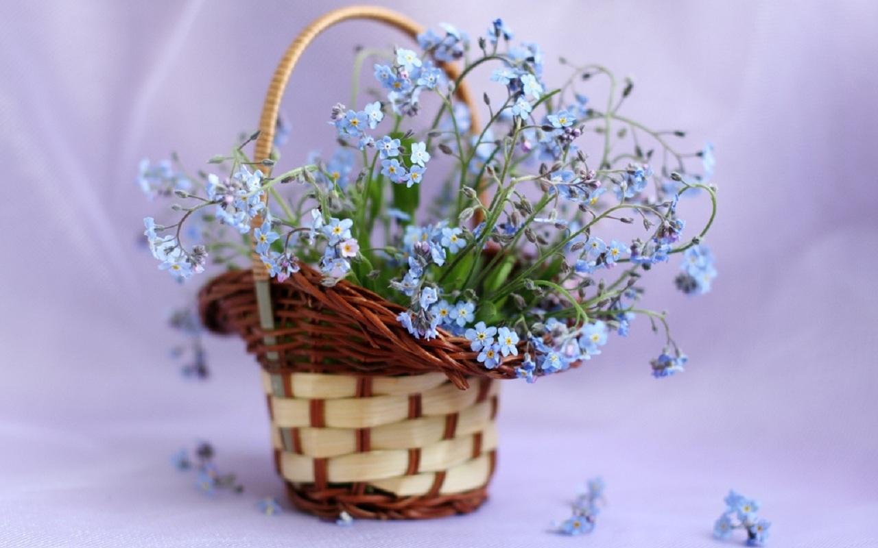 40326 скачать обои Растения, Букеты - заставки и картинки бесплатно