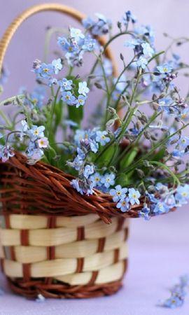 40326 télécharger le fond d'écran Plantes, Bouquets - économiseurs d'écran et images gratuitement