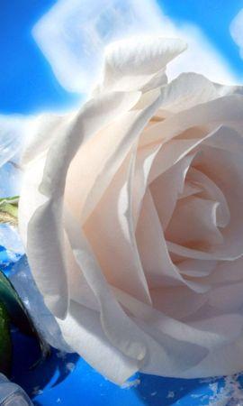 39 скачать обои Растения, Цветы, Розы - заставки и картинки бесплатно