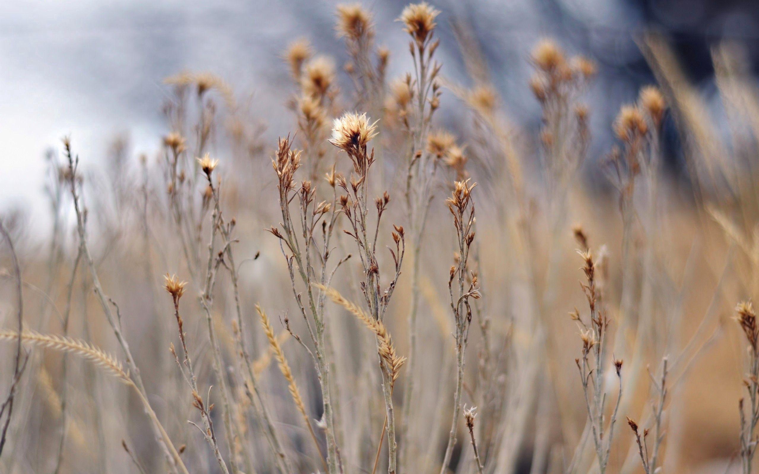 123407 скачать обои Растение, Трава, Макро, Поле - заставки и картинки бесплатно