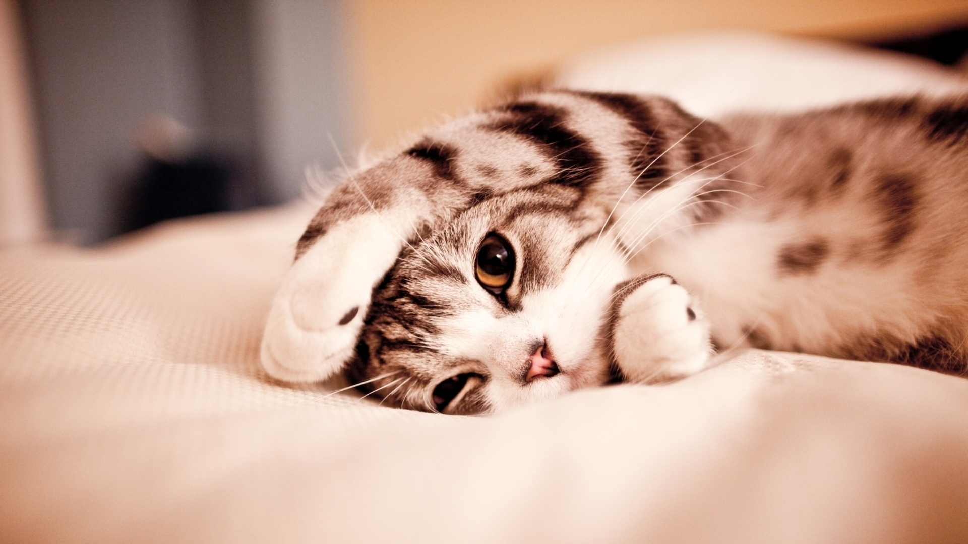 免費壁紙47802:动物, 猫 下載手機圖片
