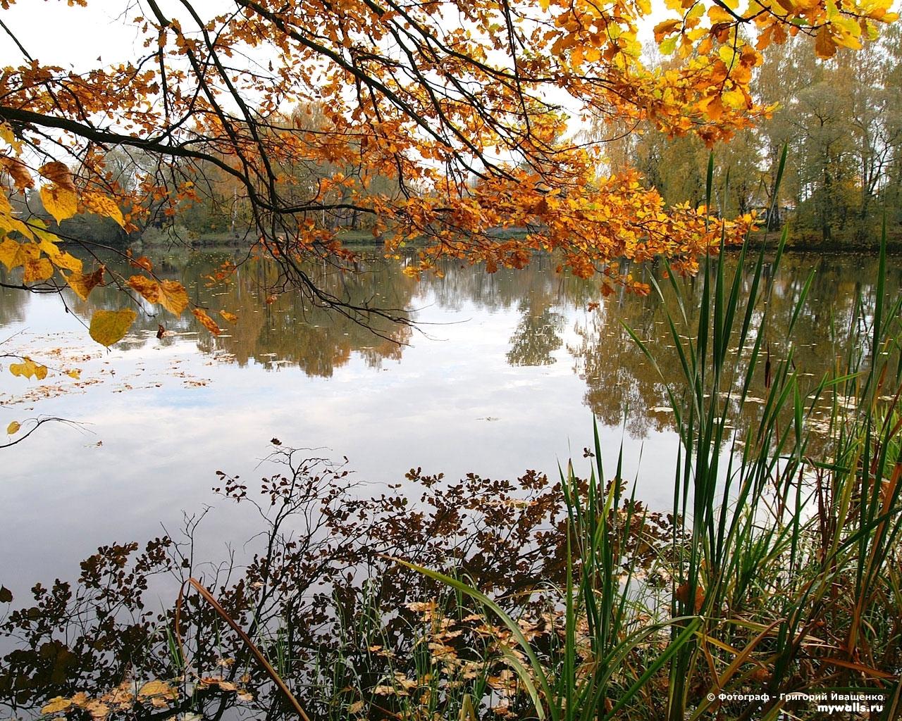 3448 скачать обои Растения, Пейзаж, Вода, Осень - заставки и картинки бесплатно