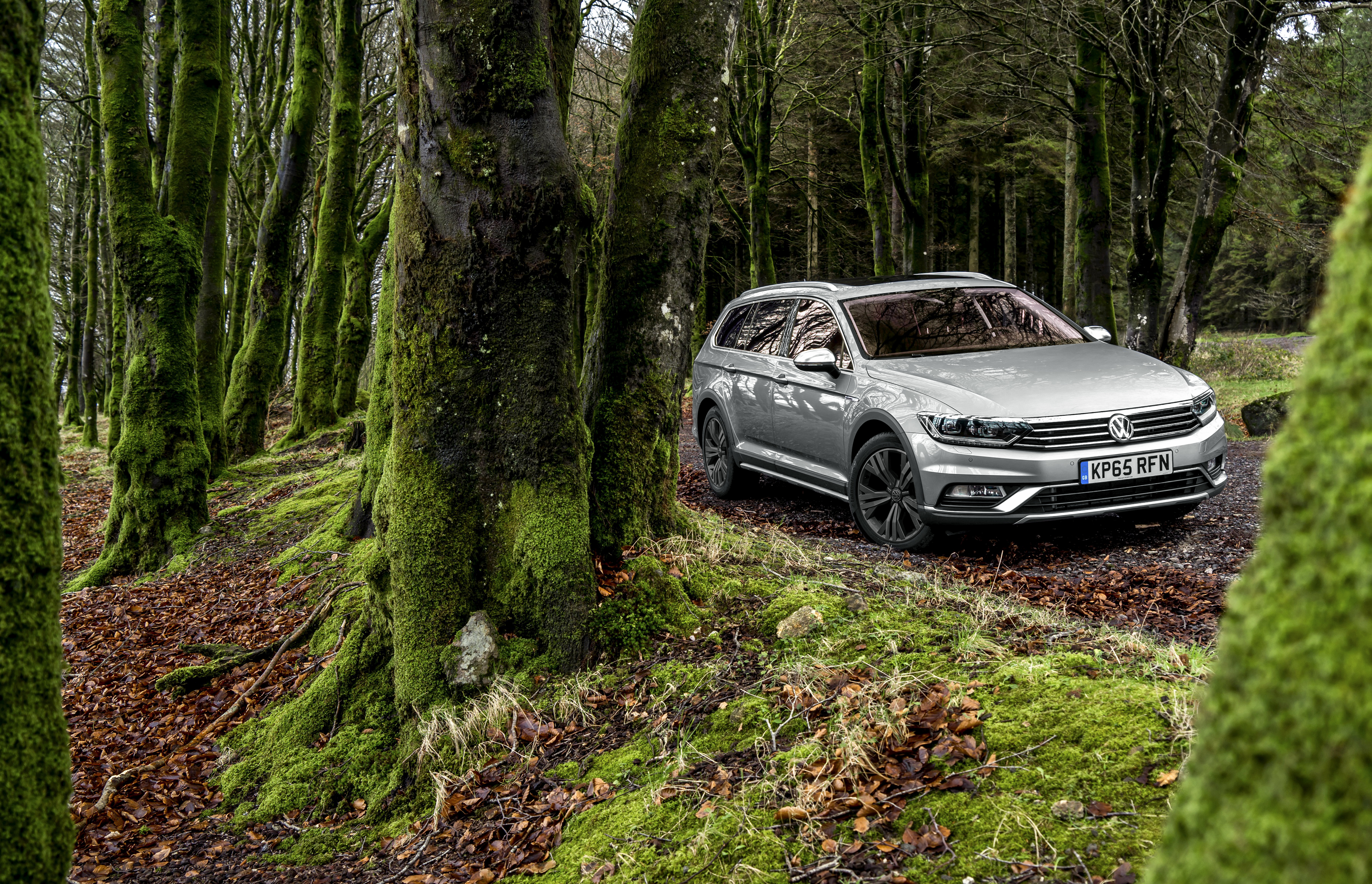 81319 download wallpaper Volkswagen, Cars, Forest, Side View, Moss, Passat screensavers and pictures for free