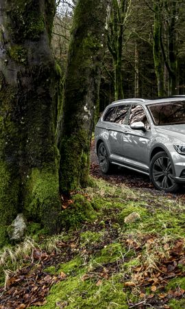 81319 Screensavers and Wallpapers Volkswagen for phone. Download Cars, Volkswagen, Passat, Side View, Moss, Forest pictures for free