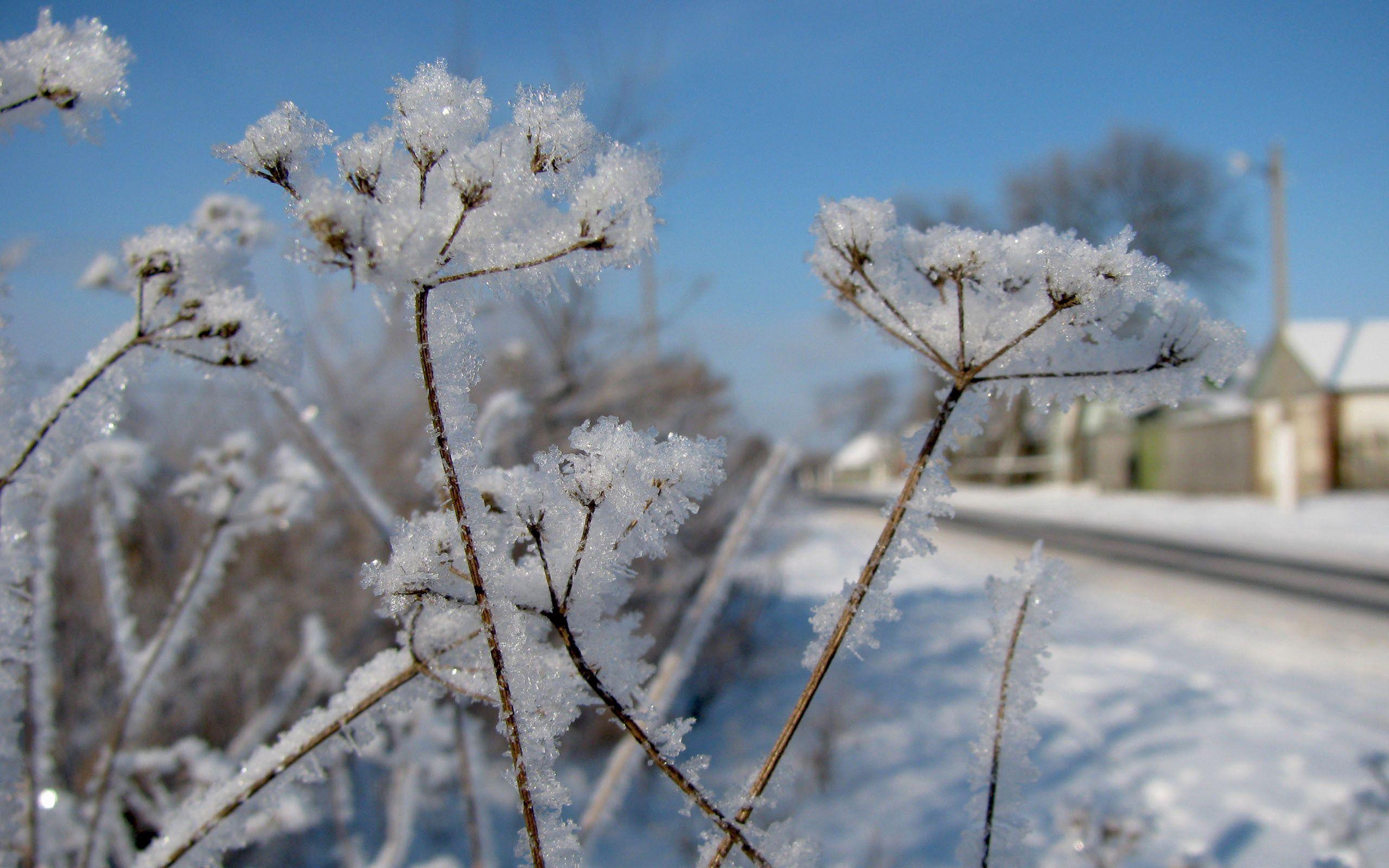 107522 скачать обои Природа, Укроп, Снег, Иней, Зима, Мороз, Холод, Дорога - заставки и картинки бесплатно