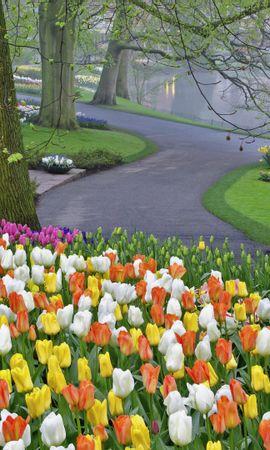 30712 télécharger le fond d'écran Paysage, Fleurs, Arbres, Tulipes - économiseurs d'écran et images gratuitement