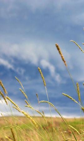 4617 скачать обои Растения, Фон, Небо - заставки и картинки бесплатно